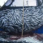 pesca abruzzo