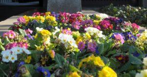 fiori_aiuola