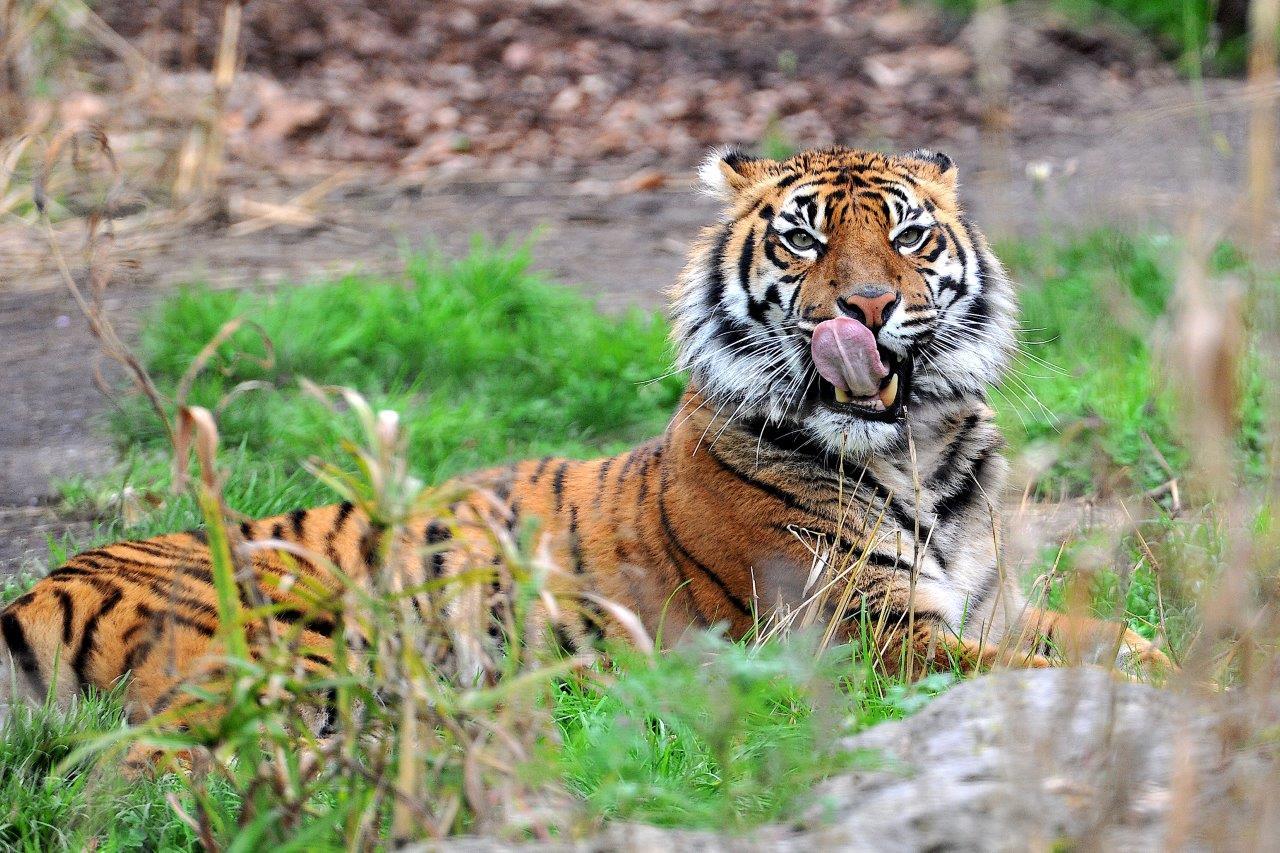 Wwf: entro 2020 sparirà 67% specie animali