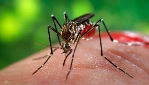 virus zika_zanzara