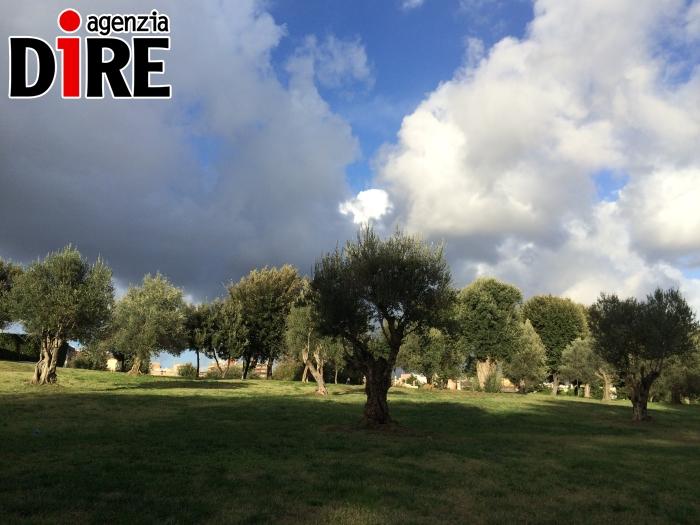 Ulivi Roma parco