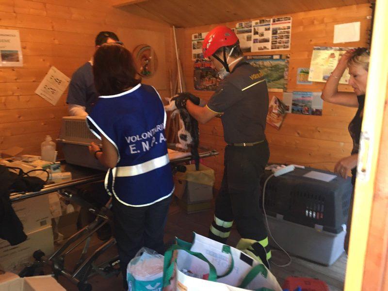 Terremoto: ad Amatrice c'è il Pronto Soccorso Animali di ENPA