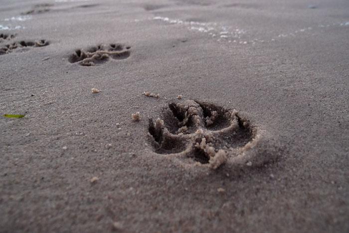 Costume Da Bagno Conchiglia : In spiaggia con il cane? ora ravenna ha 15 stabilimenti ad hoc dire.it