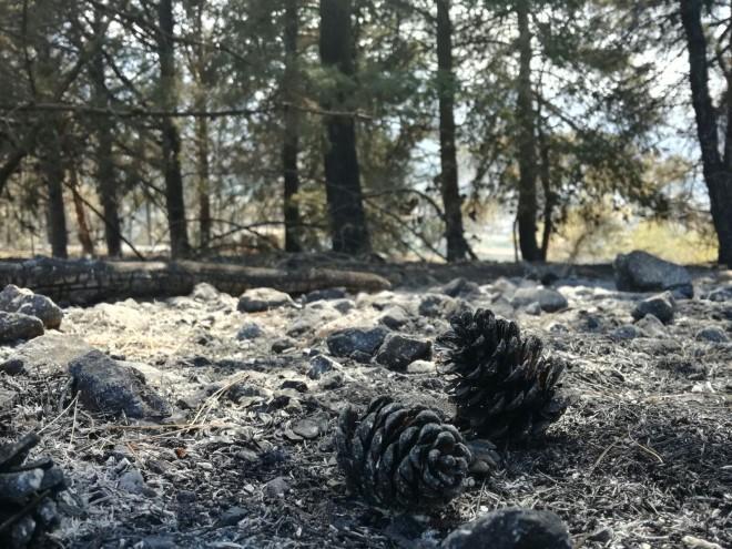incendio_monte_morrone