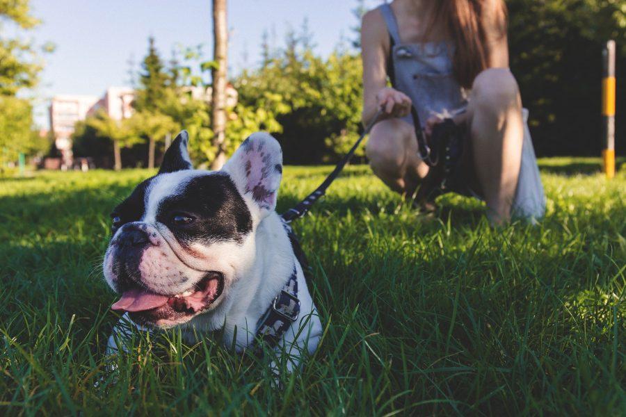 Dog_Sitter