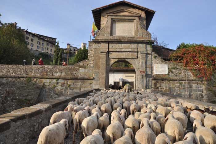 Bastoni Da Montagna Artigianali.Pecore Corni Bastoni E Stracchini Anche I Pastori Hanno Il Loro