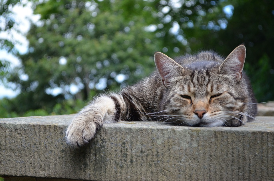 Empoli torna miciamici la festa del gatto randagio