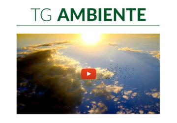 Tg Ambiente, edizione del 22 settembre 2020