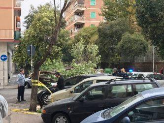 albero caduto 4