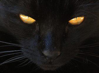 gatto nero (4)