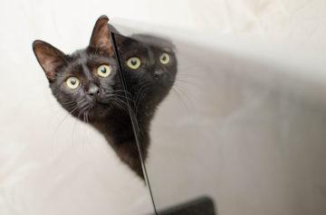 gatto nero (7)