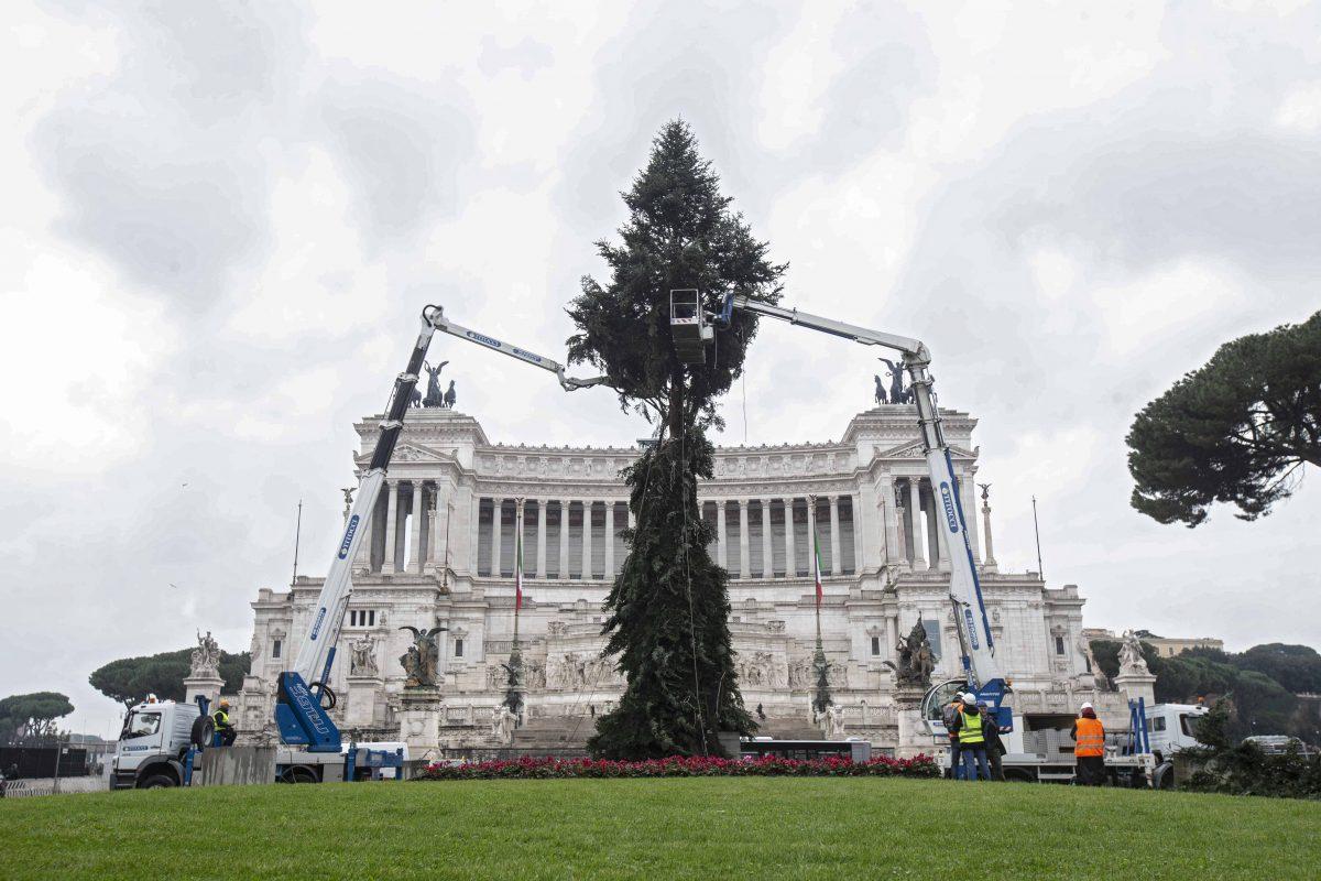 Albero Di Natale Roma 2019.A Roma Arriva Il Nuovo Albero Di Natale Spelacchio Diventa