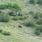 orsa e cuccioli_pnalm