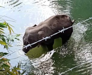 elefante_petardi_india_