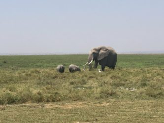 elefante kenya