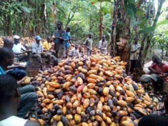 sfruttamento minori_cacao_africa
