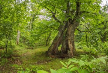 alberi_poranceto_castagni