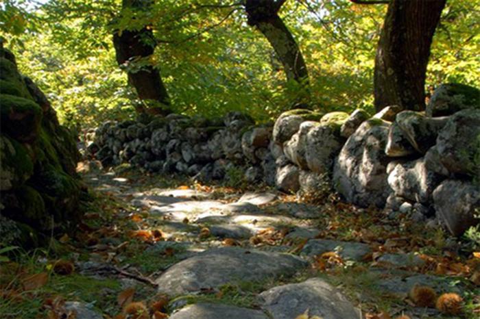 appennino_sentiero_trekking_natura_bosco
