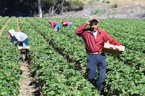 migranti Campi contadini