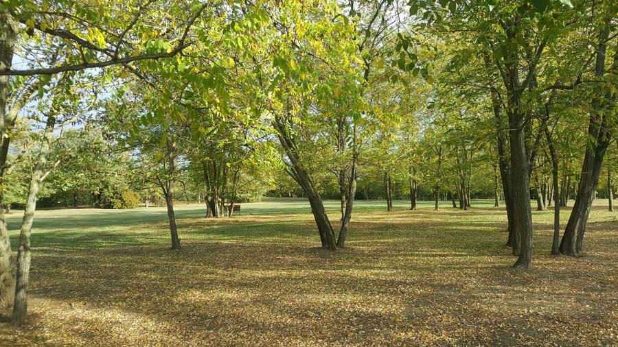 bologna alberi