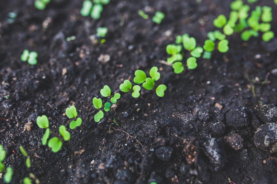 piante-natura-agricoltura