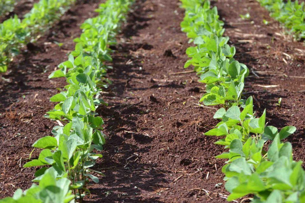 agricoltura_soia1