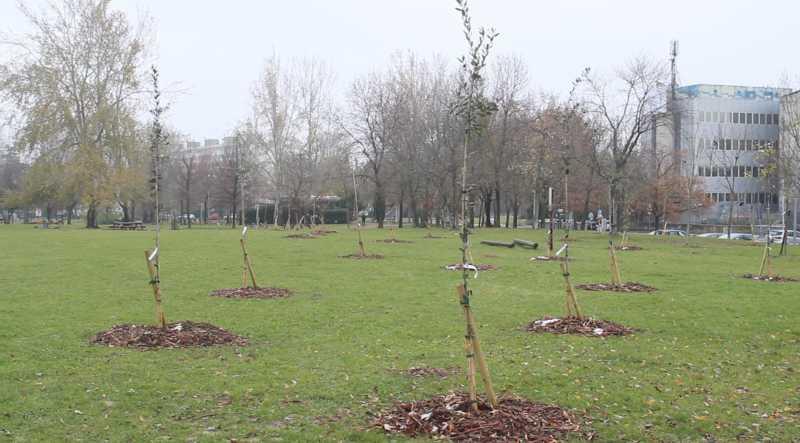 alberi bologna