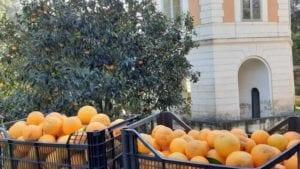 arance reggia caserta