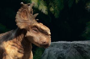 VIDEO | Arrivato a Trieste Big John, triceratopo millenario gigantesco