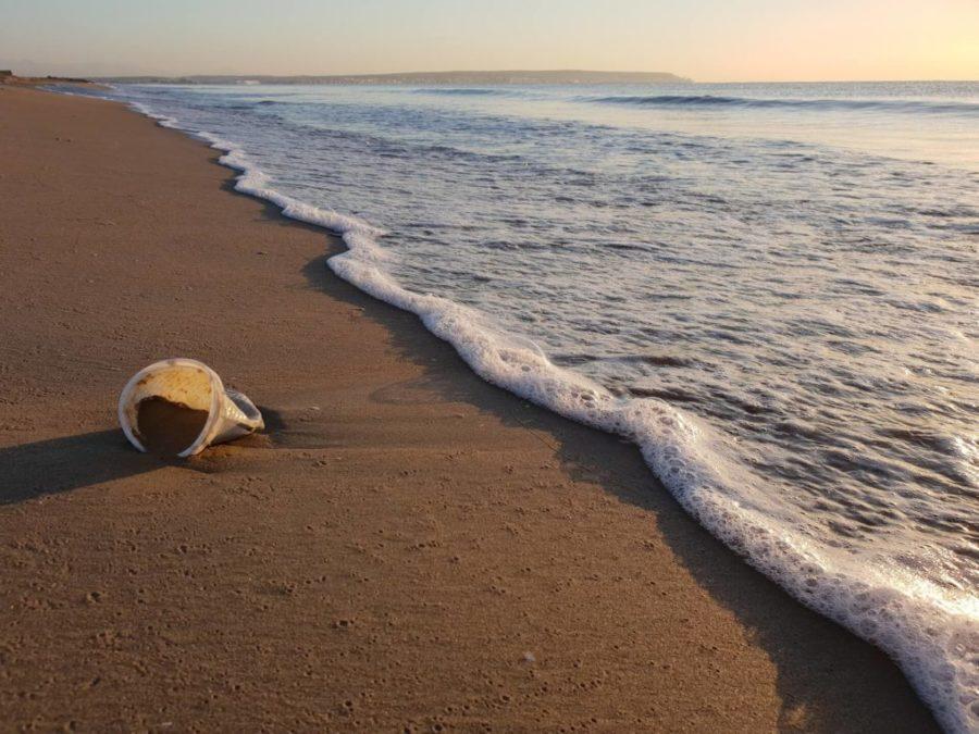 plastica mare adriatico
