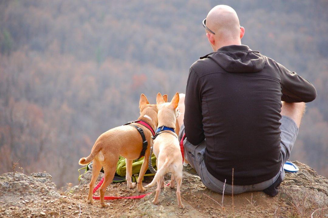 Cani montagna amici quattrozampe