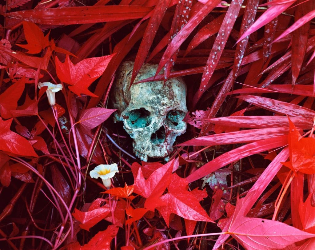 09. Of Lilies and Remains, Congo Photo credit @Richard Mosse