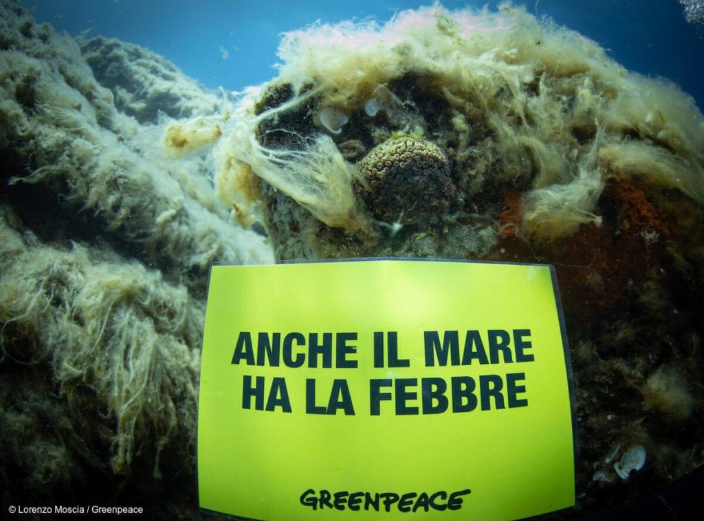 greenpeace mare