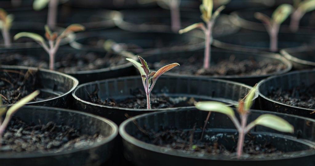 piantine piante vasi