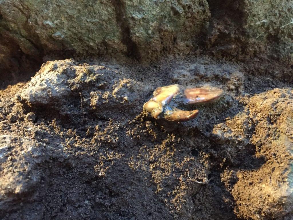grotta-guattari-NEANDERTHAL