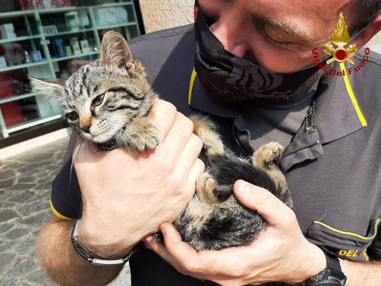 gatto salvato pordenone vigile del fuoco pompiere