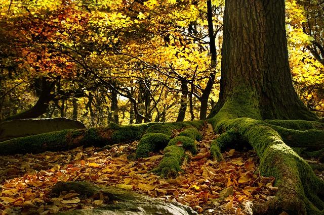 faggi foresta bosco alberi