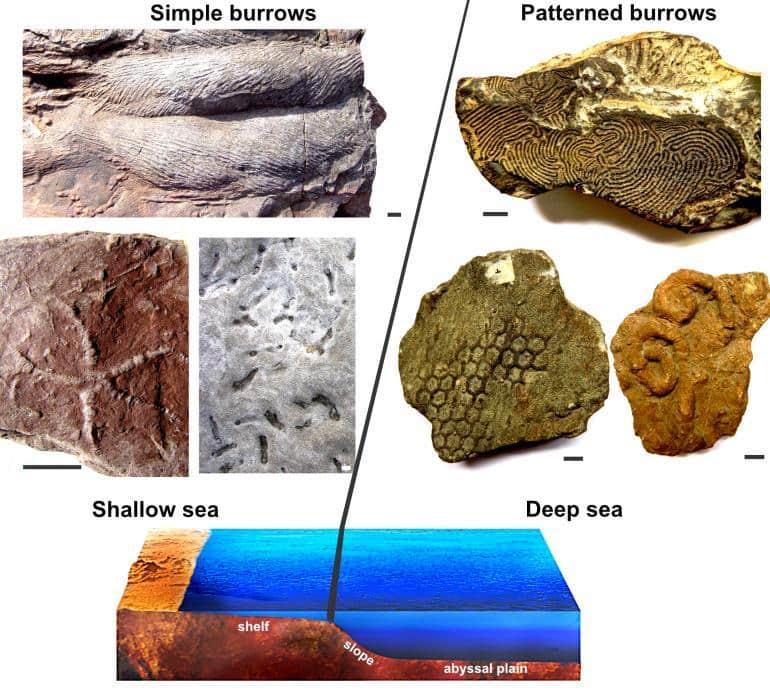tane fossili-min