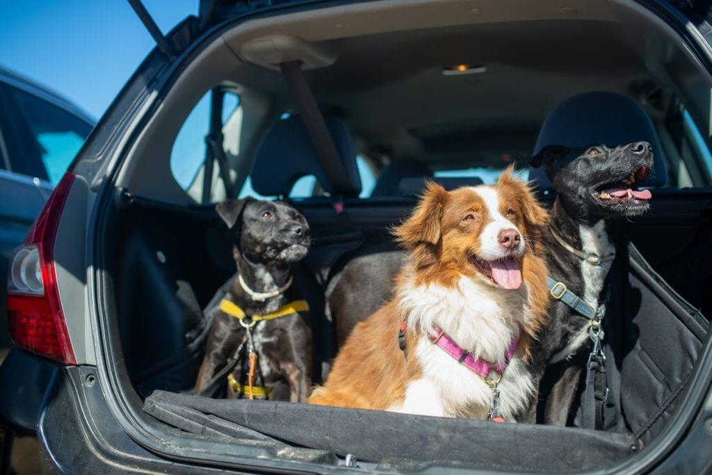 cane in auto viaggio