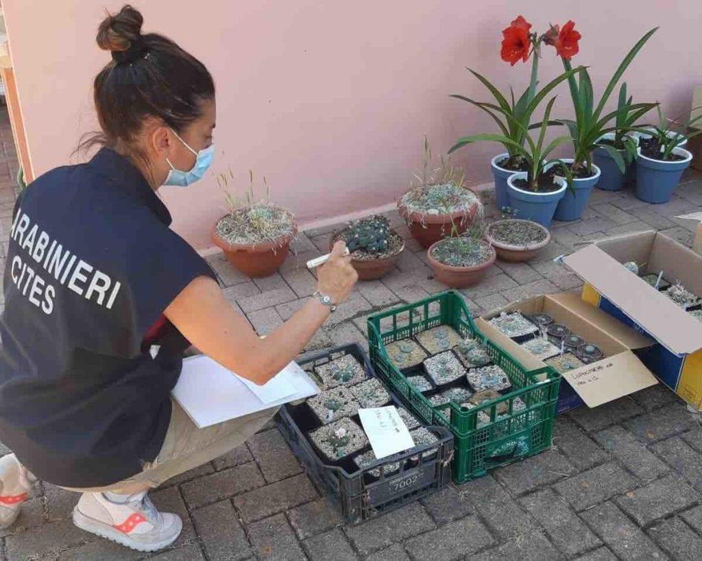 sequestro piante marche