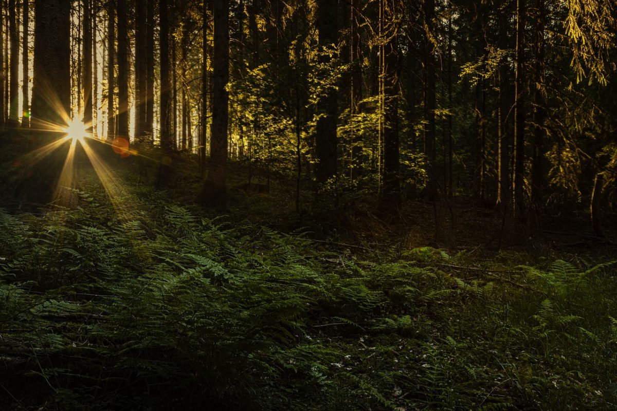 bosco foresta tramonto