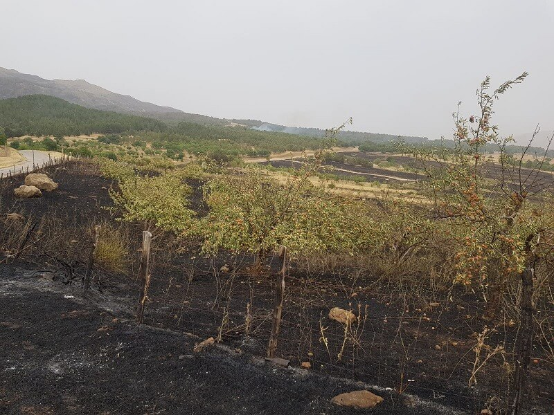incendi sicilia foto legambiente