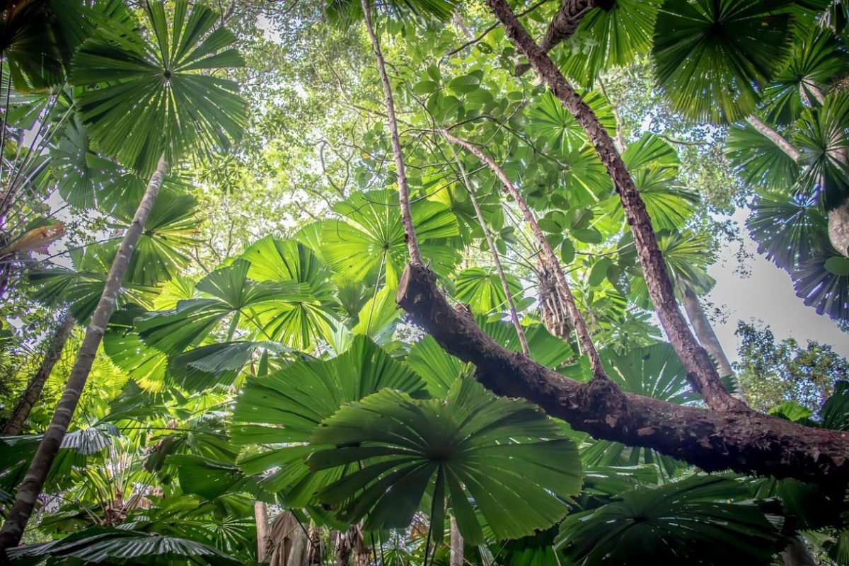 Foresta di Daintree australia
