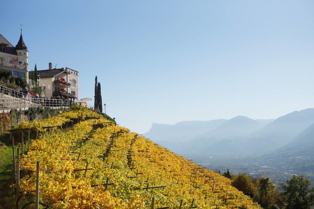 Foliage Tirolo