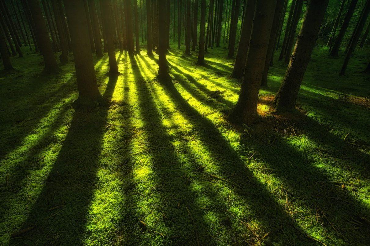 Bosco luce foresta notte