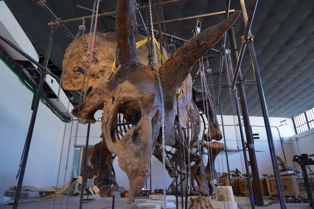 triceratopo big john
