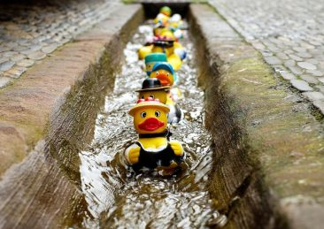 6-Get-your-ducks-in-a-row-_-Pixabay
