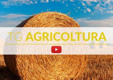 TG_Agricoltura_FB