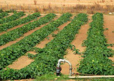 africa_irrigazione
