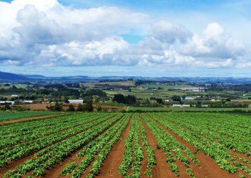 agricoltura-lazio